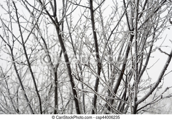 Trees in Winter - csp44006235