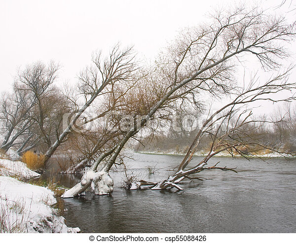 Trees leaned over the river in winter - csp55088426