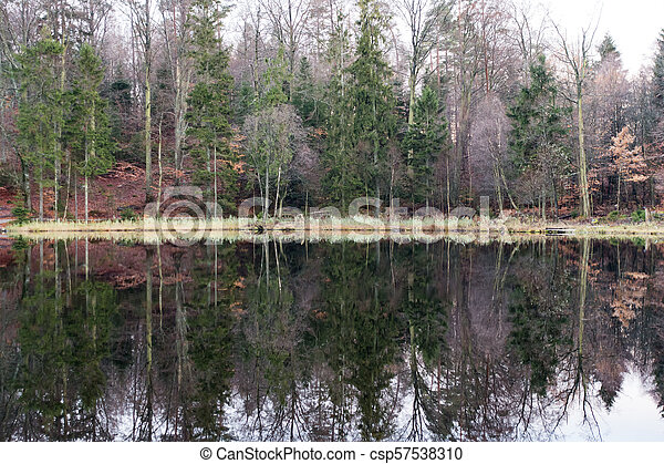 Trees mirrored in the lake - csp57538310