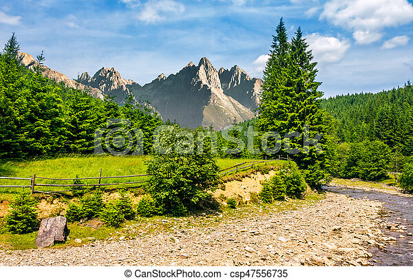 trees near the river in mountains - csp47556735