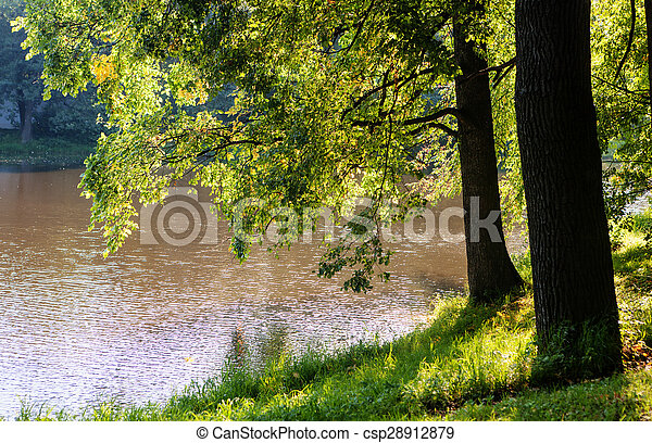Trees near the water - csp28912879