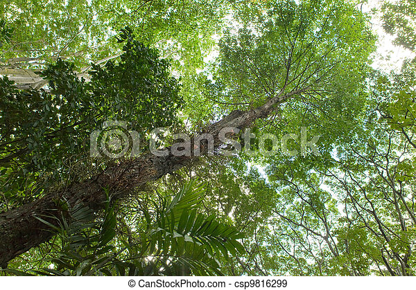 Trees of tropical climate, bottom view. - csp9816299