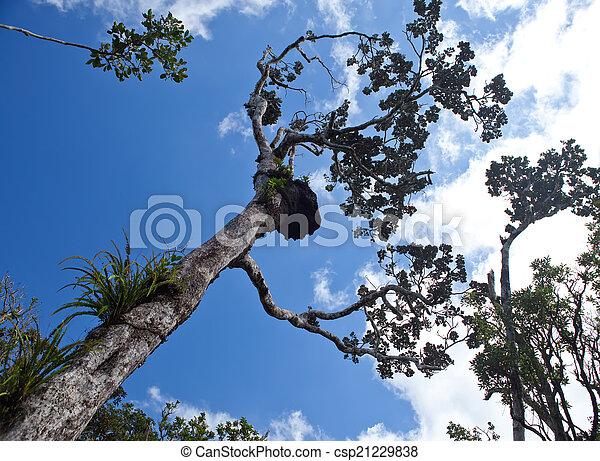 Trees of tropical climate, bottom view. - csp21229838