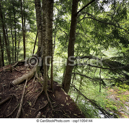 Trees On A Cliff - csp11054144