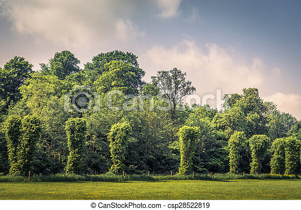 Trees on a row on a field - csp28522819