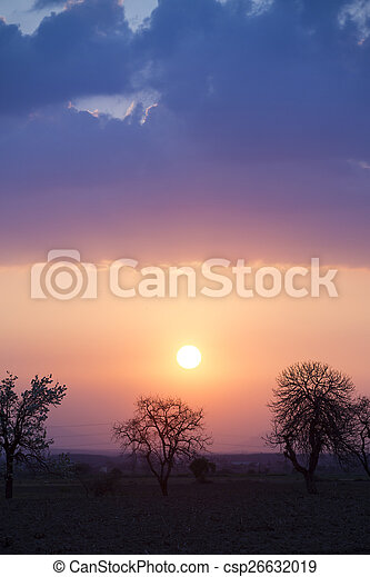 Trees on meadow at sunset with sun - csp26632019
