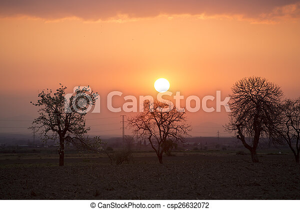 Trees on meadow at sunset with sun - csp26632072