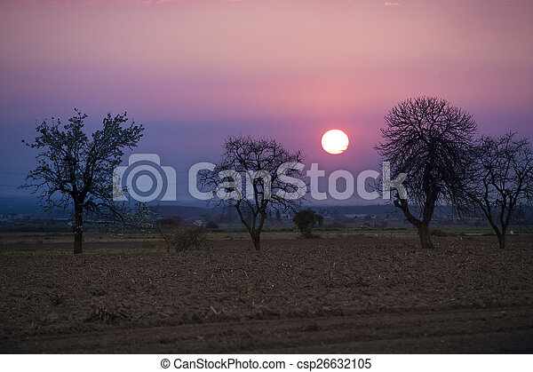 Trees on meadow at sunset with sun - csp26632105