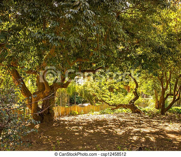Trees on sunny day in park - csp12458512