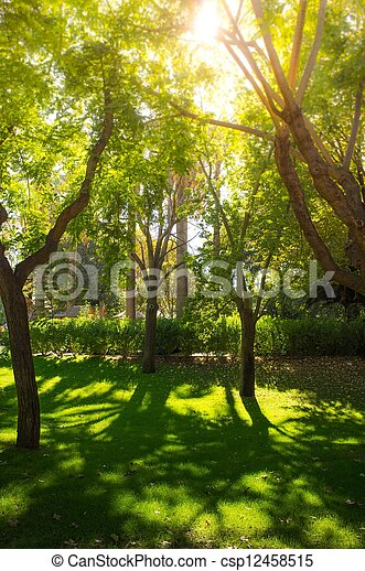 Trees on sunny day in park - csp12458515