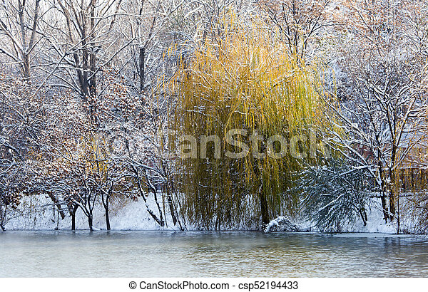 trees on the lake in winter - csp52194433