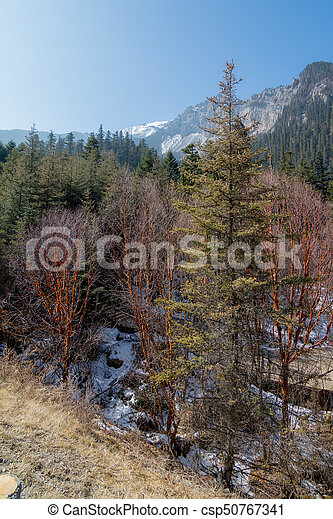 Trees on the slope of the mountain - csp50767341