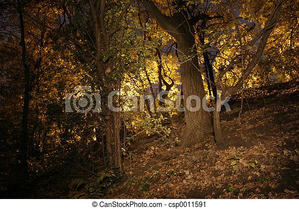 Trees - csp0011591