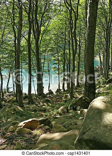 trees - csp1431401