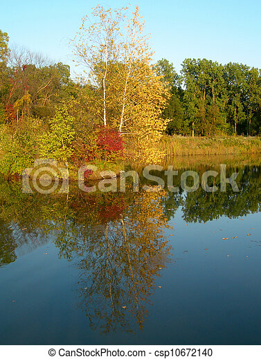 Trees reflected in a pond           - csp10672140