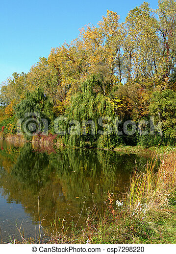 Trees reflected in a pond           - csp7298220