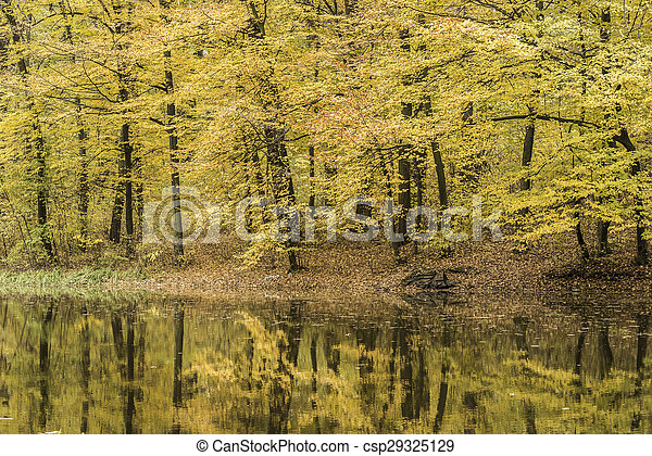 Trees reflection in a forest lake during autumn time - csp29325129