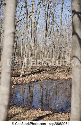 Trees reflection in a water - csp28089264
