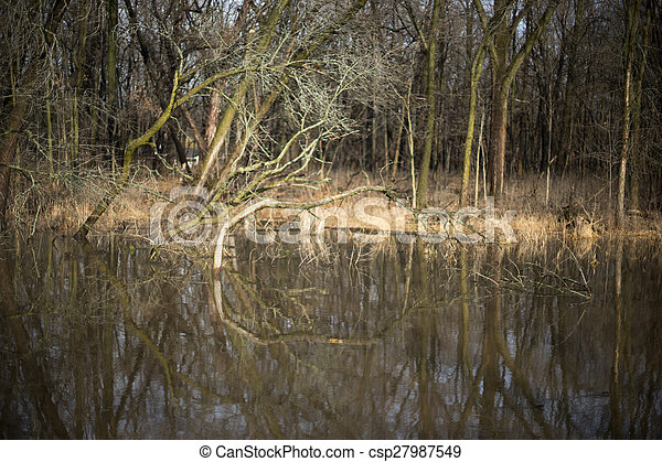 Trees reflection in a water - csp27987549