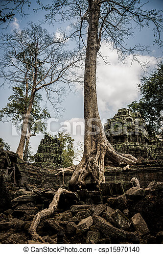 Trees roots growing over Angkor Wat Ruins, Cambodia, Asia. Tradition, Culture and Religion. - csp15970140