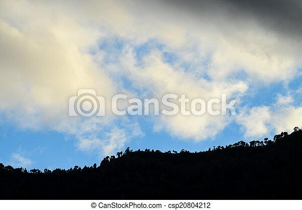 Trees Silhouette - csp20804212