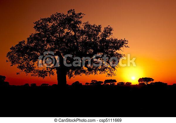 Trees Silhouette - csp5111669