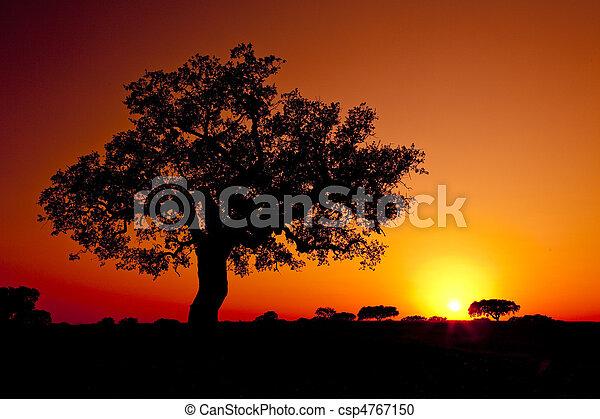 Trees Silhouette - csp4767150