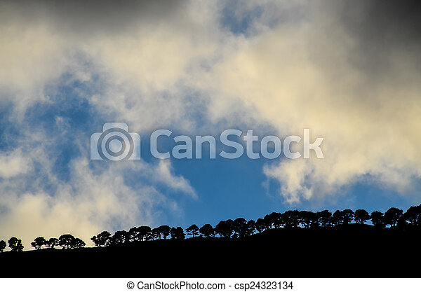 Trees Silhouette - csp24323134