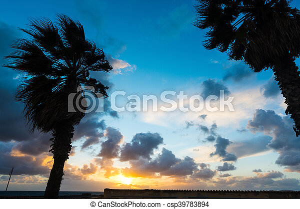 trees silhouettes at sunset - csp39783894