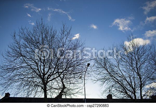 Trees silhouettes - csp27290883