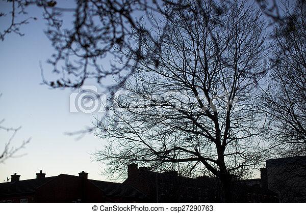 Trees silhouettes - csp27290763
