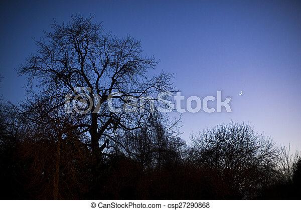 Trees silhouettes - csp27290868