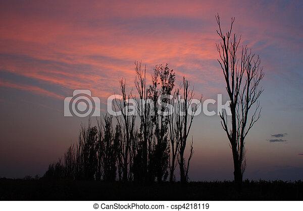Trees silhouettes - csp4218119