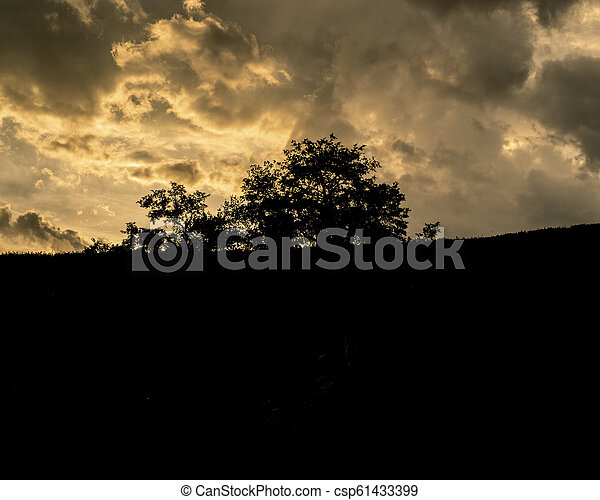 Trees silhouettes - csp61433399
