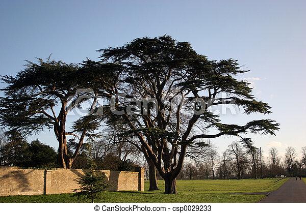 trees - csp0029233
