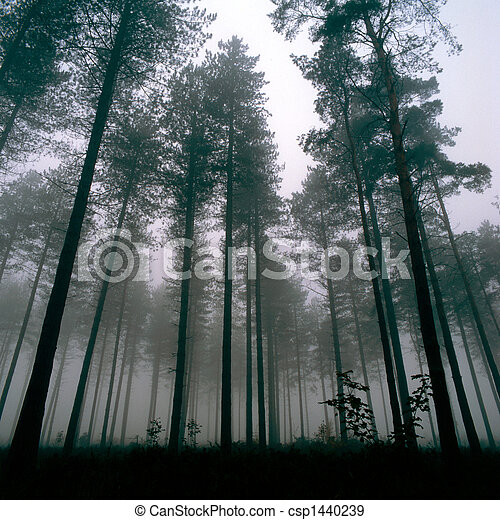 Trees Thetford Forest - csp1440239