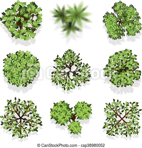 Trees Top View Vector Set For Landscape Design And Map