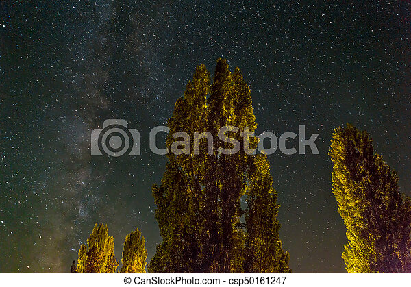 Trees Under the Milky Way on a Starry Night - csp50161247