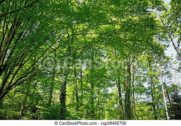 trees under the sun - csp38492706
