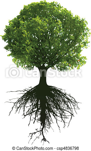 Trees with roots - csp4836798