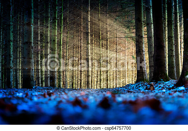 Trees with sunbeams in a forest - csp64757700