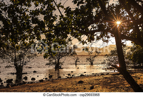 Trees with sunset in the sea - csp29693968