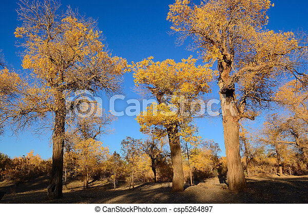Trees with yellow leaves - csp5264897