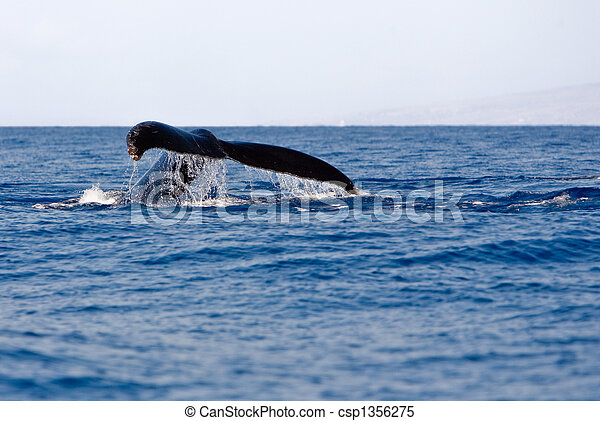 trematodo, humpback - csp1356275
