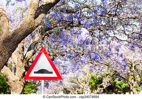 Triangular road sign warning of speed bump against purple jacaranda tree background - csp34074694