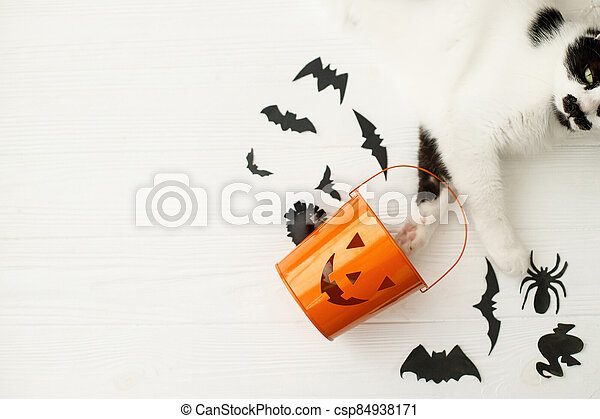 Trick or treat! Cat paws holding Jack o lantern candy pail on white background with bats and spider decorations, celebrating halloween at home. Top view with space for text. - csp84938171