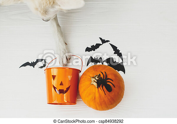 Trick or treat! Dog paw holding Jack o lantern candy pail on white background with pumpkin, bats and spider decorations, celebrating halloween at home. Top view with space for text. - csp84938292