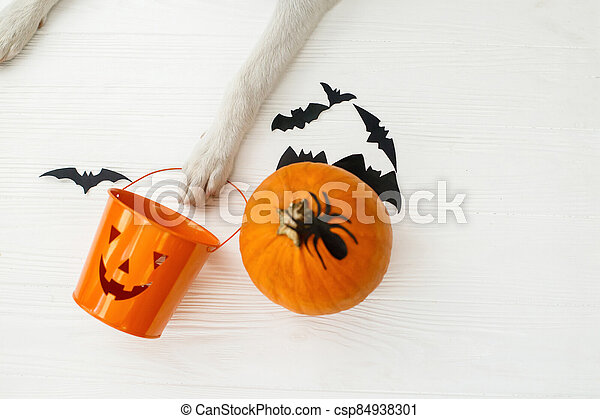 Trick or treat! Dog paw holding Jack o lantern candy pail on white background with pumpkin, bats and spider decorations, celebrating halloween at home. Top view with space for text. - csp84938301
