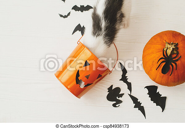 Trick or treat! Little kitten playing with Jack o lantern candy pail on white background with pumpkin, bats and spider decorations, celebrating halloween at home. - csp84938173