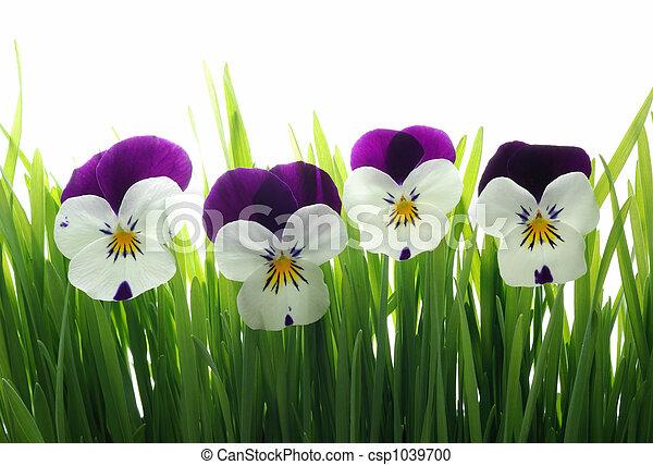 tricolor, gräs, grön, altfiol - csp1039700